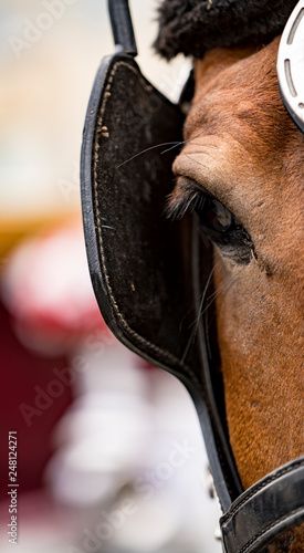 Photo Close-up of eye of a horse