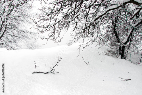 Fotografie, Obraz Broken tree branch in snowfield, covered with snow, nature landscape in cold win