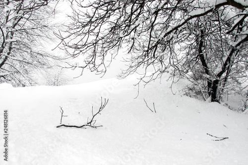 Fotografia, Obraz Broken tree branch in snowfield, covered with snow, nature landscape in cold win