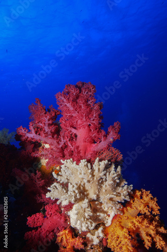 Foto op Aluminium Onder water Coral reef at the Red Sea Egypt