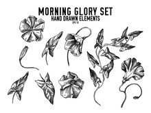 Vector Collection Of Hand Drawn Black And White Morning Glory