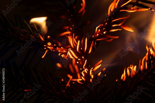Fotografiet  Burning and glowing pine needles with a dark background