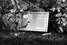 City Garden Tree Peony Monumen...