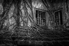 Beng Mealea Ruins Over Grown