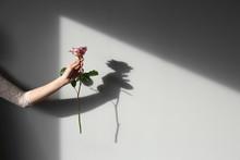 Female Hand Holding Rose On Li...