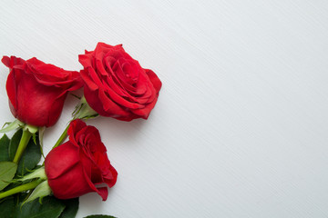 Three Red Roses on white wo...