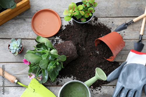 In de dag Tuin Composition with green plants, soil and gardening tools on wooden table
