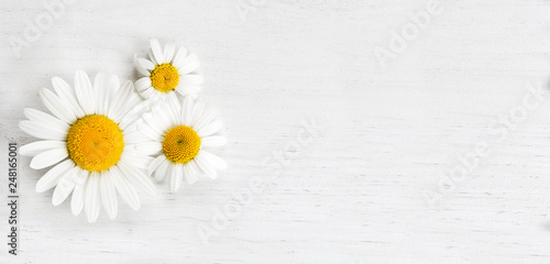 Papiers peints Marguerites Panorama of marguerites on white background, spring concept