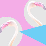 pop art collage pink isolated flamingo, minimal pastel trendy contemporary mood - 248179429