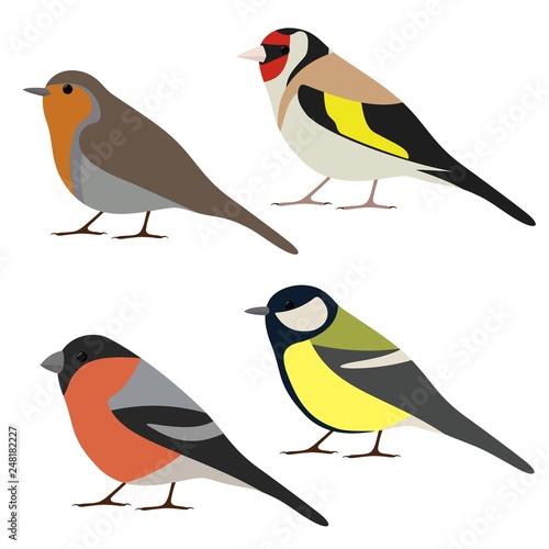 Obraz na plátně Vector set of garden bird