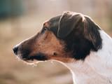 portrait of a dog looking around in garden
