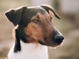 Adorable terrier dog portrait