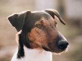 Smart dog portrait. Focus on face.