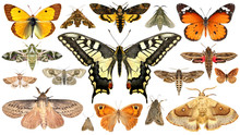 Butterflies And Moths. Isolated On A White Background