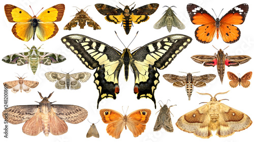 Fototapeta  Butterflies and moths. Isolated on a white background