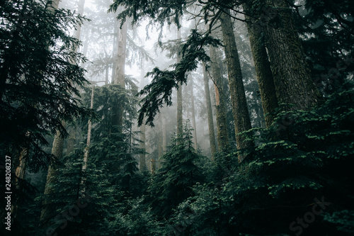 View of forest with fog - 248208237