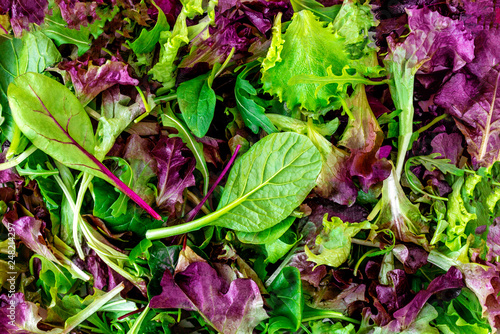 Fototapeta Salad mix leaves background. Fresh Salad Pattern with rucola, purple  lettuce, spinach, frisee and  chard leaf. obraz
