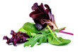 canvas print picture - Salad leaves mix with rucola, purple  lettuce, spinach and  chard, leaf isolated on white background.