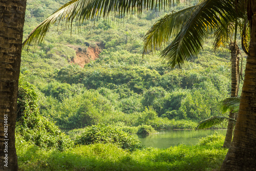 Fotografía  view from the palm jungle to the green slope of the hill and the lake