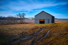 Tobacco Barn  With Hanging Tob...