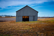Tobacco Barn  With Hanging Tobacco