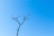 Winter Tree In Forest With Blue Sky For Copy Text