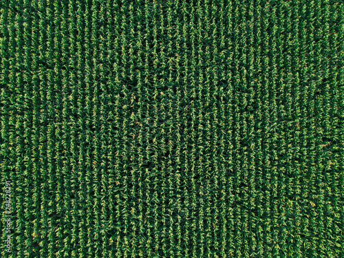 Valokuvatapetti Aerial drone top view of cultivated corn field