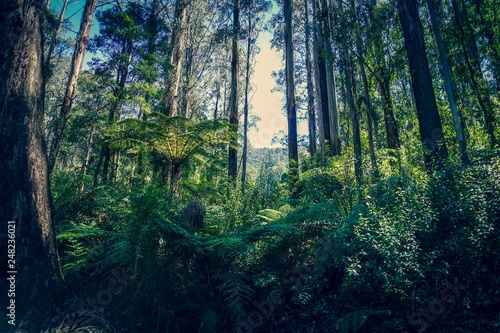 Wall Murals Forest Wonderful rainforest in Australia
