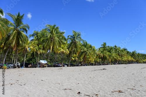 Photo  Palm Trees Beach - Samara Beach Costa Rica