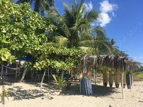 Photo  Palm Trees on the Beach
