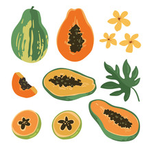 Vector Summer Set With Papaya And Flowers Isolated On White Background