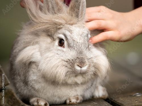 Fotografie, Obraz  Hand of a child caressing a white rabbit