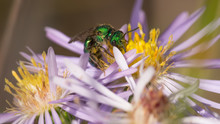 Bright Sparkly Green Sweat Bee...