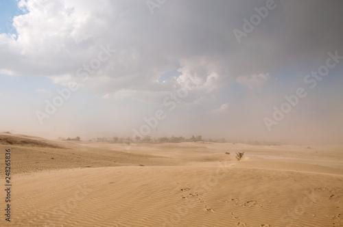 Poster de jardin Desert de sable Dust storm in the Thar desert