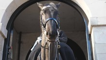 A Close Up View Of A Guard Horse Under An Arch.
