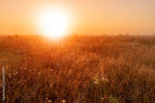 Fotografía  World environment day concept: Calm of country meadow sunrise landscape backgrou