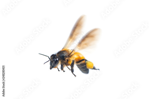 Photo sur Toile Bee A close up of flying bee isolated on white background