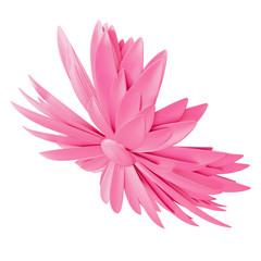 Światło - różowy kwiat odizolowywający na białym tle