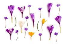 Violet, White, Yellow Crocuses...
