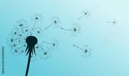 Drawing of flower of field dandelion.