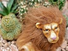 Ceramic Lion For Decoration In...