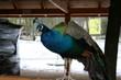 barwny świat zwierząt