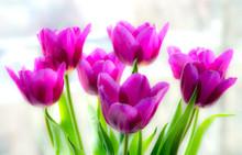 A Bouquet Of Purple Tulips On ...