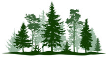 Evergreen Forest Pine, Tree Is...