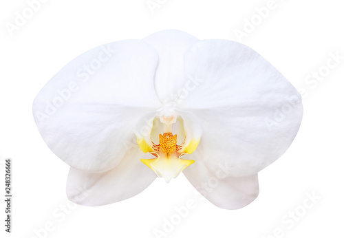 Fotografía  White phalaenopsis orchids blooming isolated on background with clipping path, n