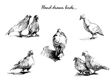 Hand Drawn Birds On White Background.  Beautiful Sketch For Your Design.