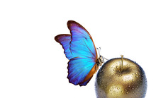 Morpho Butterfly On A Golden Apple With Dew Drops Isolated On White. Copy Spaces.