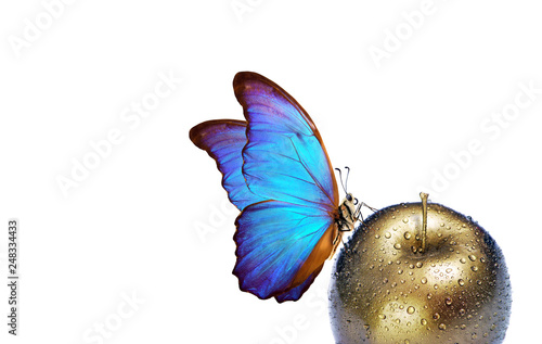 Fotografie, Obraz  morpho butterfly on a golden apple with dew drops isolated on white