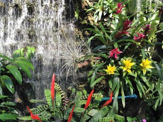 Fototapetawaterfall and flowers in the garden