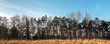 Banner Wald mit Gras im schneelosen Winter